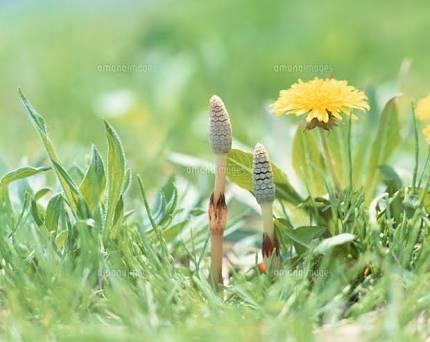 小さな春を見つけた人!