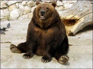 最強動物、なんだと思いますか?