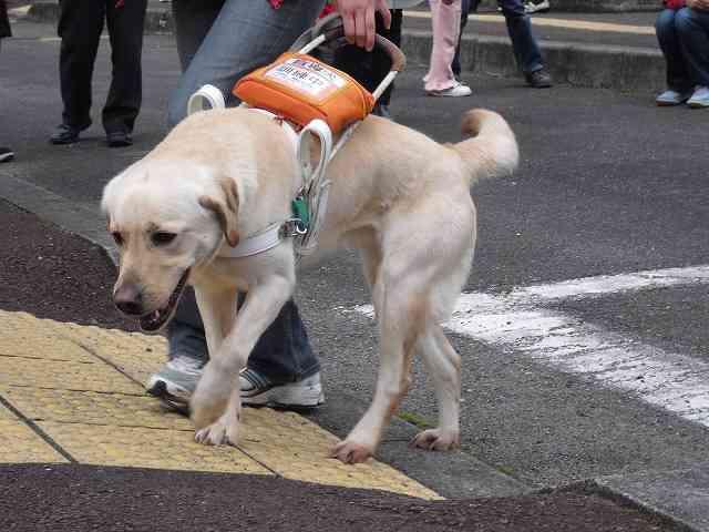 犬のしつけについて