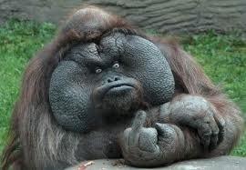 極悪顔の動物や赤ちゃん画像が集まるトピ