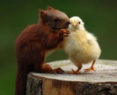 自分とパートナーを動物に例えるトピ