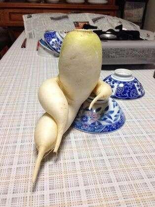 安い野菜は理由がある?