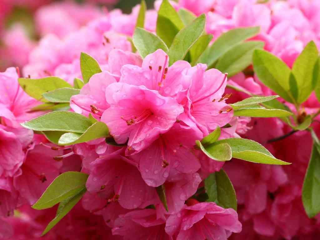 初夏の花を貼るトピ