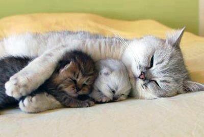 お子さんと一緒に寝るのが好きな方