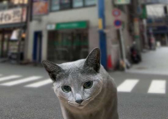 ネコ あるある!
