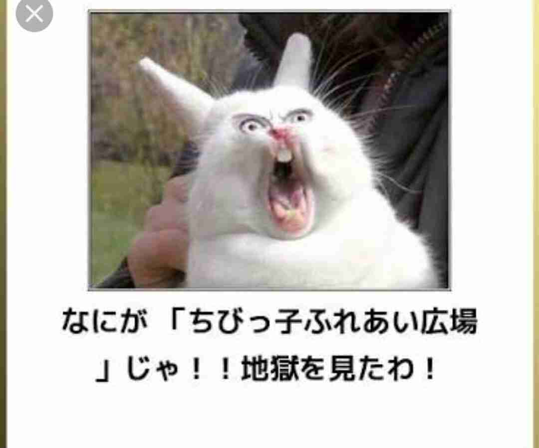 変顔  動物編