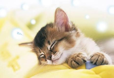 布団に入ってから寝るまで何を考えていますか?