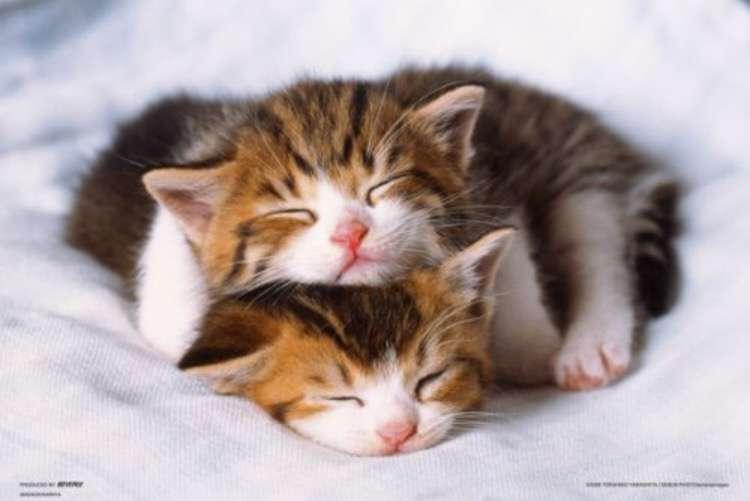 【画像】とっても眠そうな動物たち