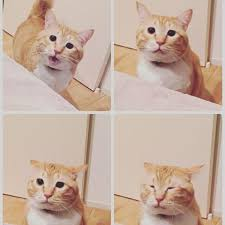 猫を複数飼いしてる方、お話聞かせてください。