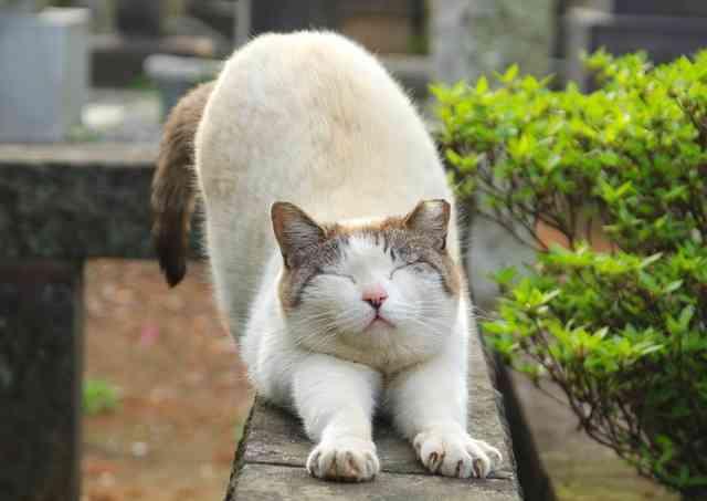 猫2匹踏みつけ死なせた疑い 男を書類送検「競馬で負けて」