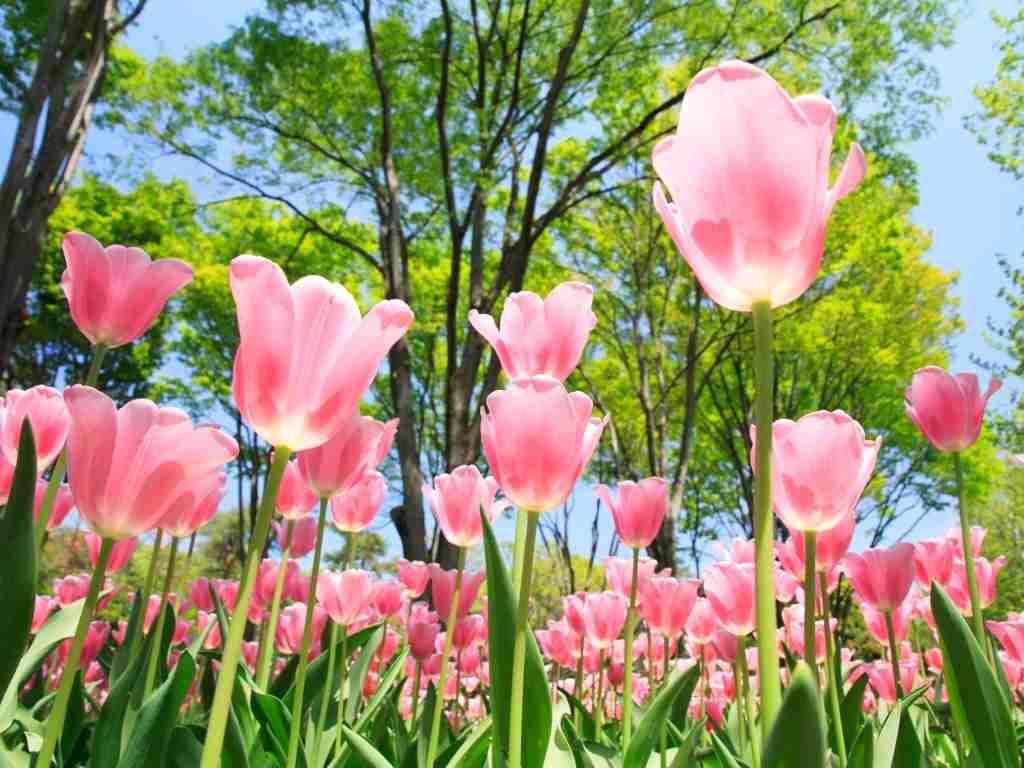 四季の中で春が1番好きな人!