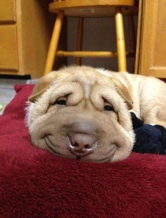 思わず微笑んでしまう画像