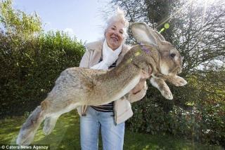 ユナイテッド機内で大型ウサギ死ぬ 著名人が購入、非難再燃