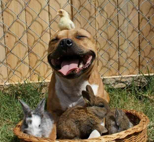 ダルビッシュが「犬の里親に」心優しき行動を地元紙が報じる