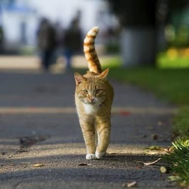 タイトルの一部を『猫』に変えて可愛くしちゃうトピ♪