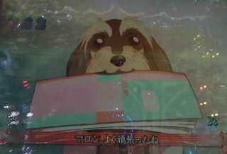 浜崎あゆみ、愛犬を抱いた姿に「西内まりやにそっくり」の声