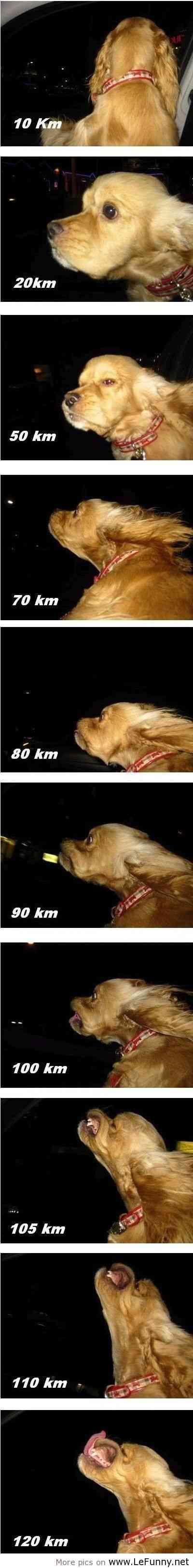 風に吹かれている画像下さい。