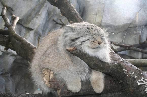 【癒し】思わずモフモフしたくなる動物の画像