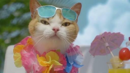 夏を感じるCM画像を貼るトピ