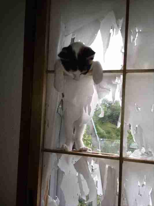 猫と暮らす工夫