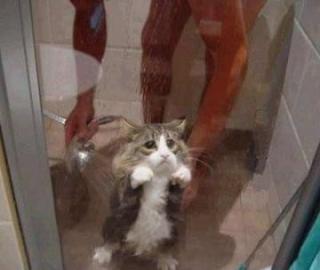 あーお風呂入りたくないって時