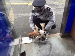 「ライフルを持った猫がいる」警察が出動