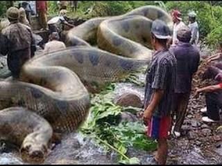 巨大生物好きな人集まれー!【閲覧注意もあるかも?】