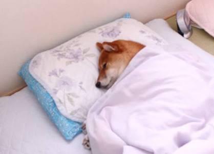 ペットが寝たきり…な人が語るトピ。