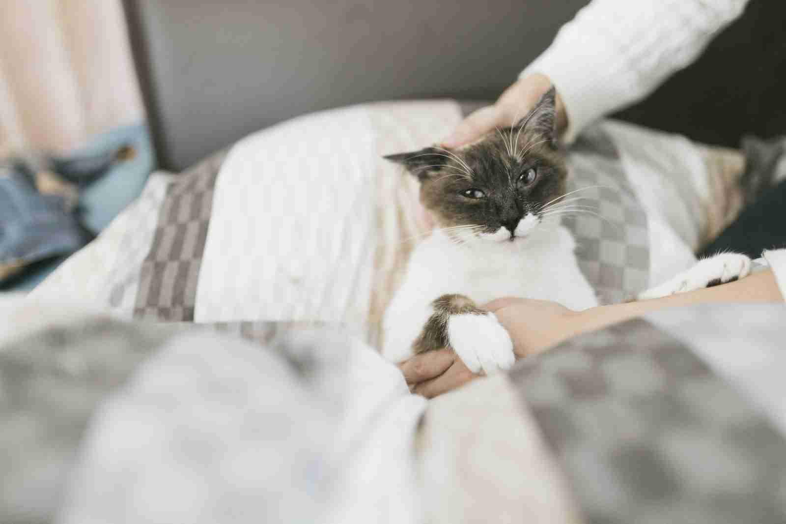 どんな顔でも許せちゃう。なにやらご不満げな子猫たち