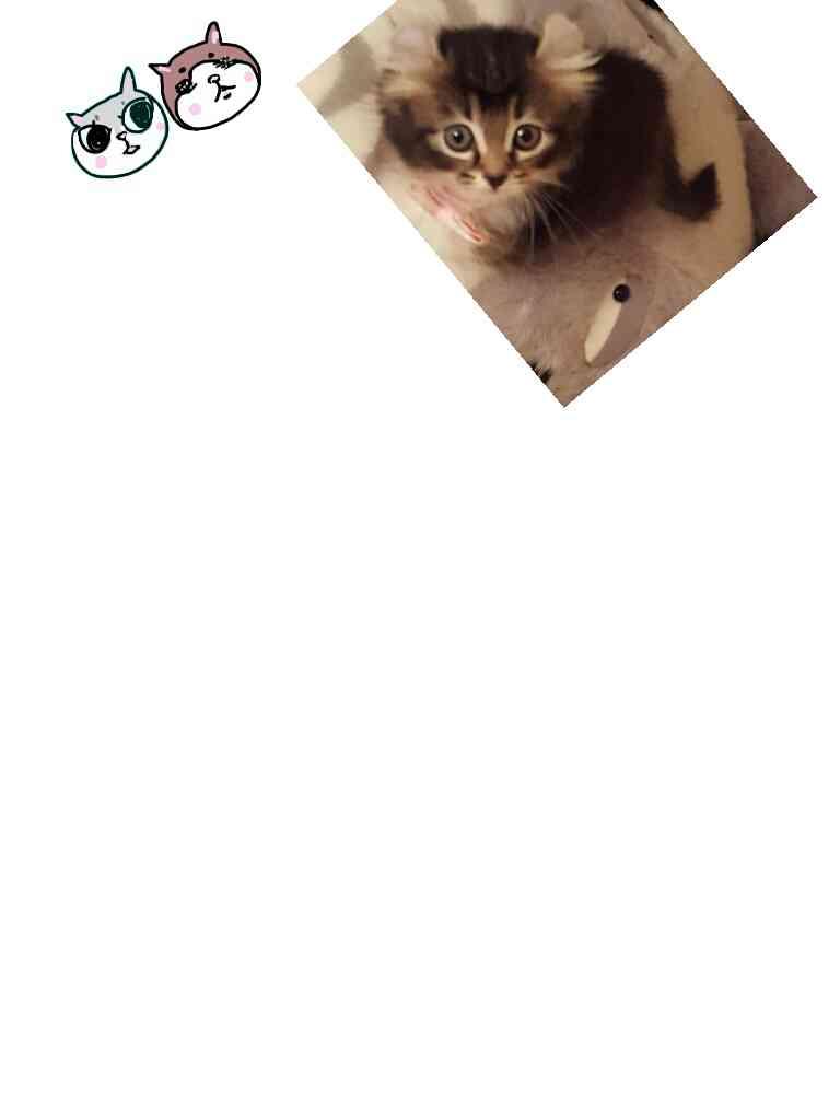 この画像にペットの似顔絵を足していくトピ