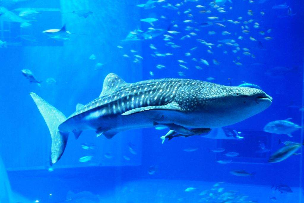 好きな海の生物教えてください♪