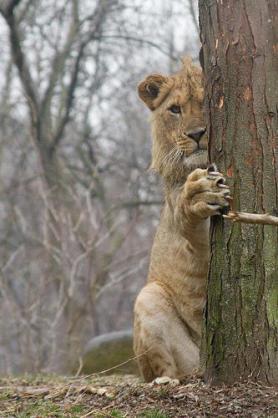 獅子座の人語りましょ♪