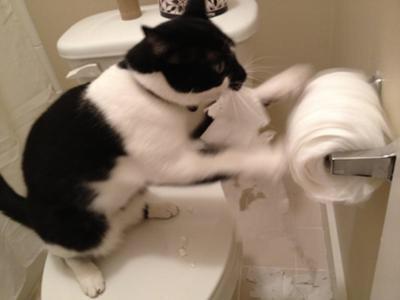 お宅の猫の困った行動