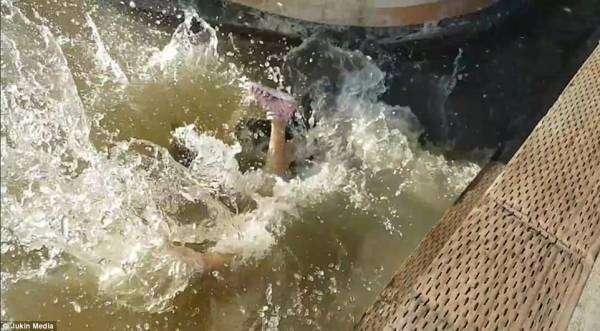 アシカに引っ張られ水中に落ちた少女 感染症の危険も(カナダ)<動画あり>