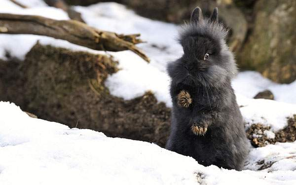 黒くて可愛い生き物のトピ