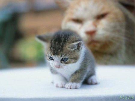 怖い、不気味な動物の画像でびっくりさせて!