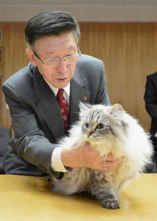 生後6カ月の子ネコ…だけどすでに大人の貫禄!! めちゃビッグサイズなロシアの白猫が大人気です