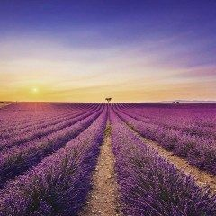 紫色の画像で穏やかになるトピ part.2
