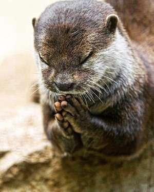 神様や仏様に感謝していますか?