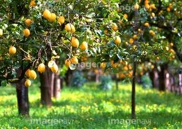 TAKAHIROらがEXILEのレモンサワー伝説に言及「スタッフ含め2500杯」
