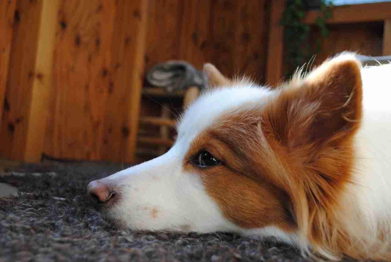 愛犬のシャッターチャンス。