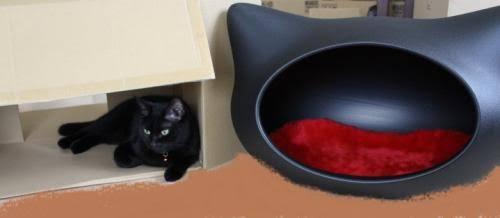 「猫専用の布団」でぐっすり寝ちゃうニャンコの姿に胸きゅん…「癒されすぎる」とSNSで話題に!