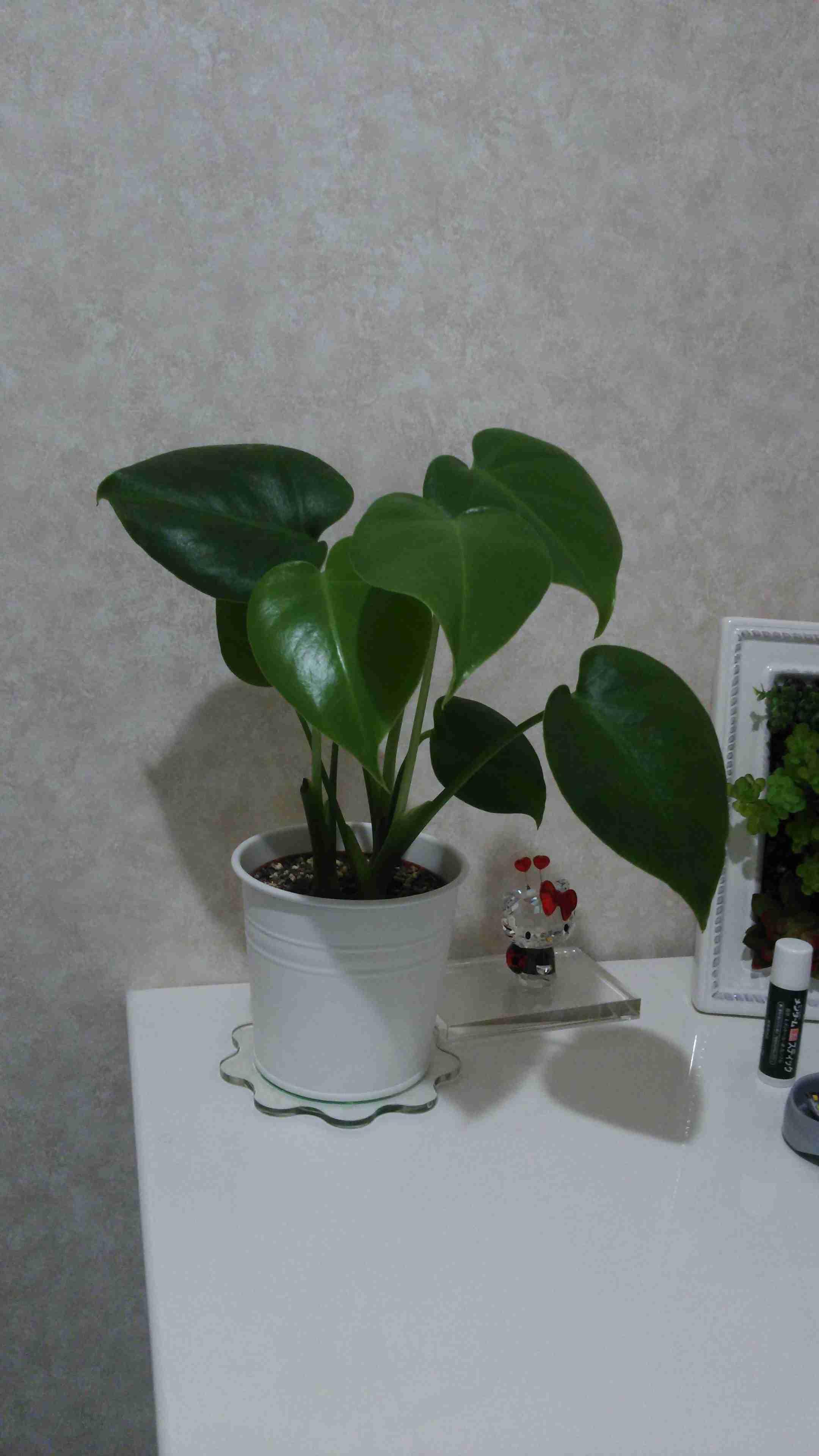 観葉植物好きな人!!
