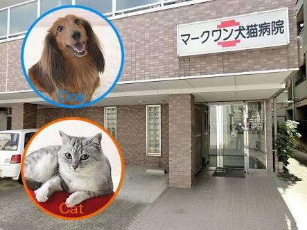 皆さんの街の動物病院について