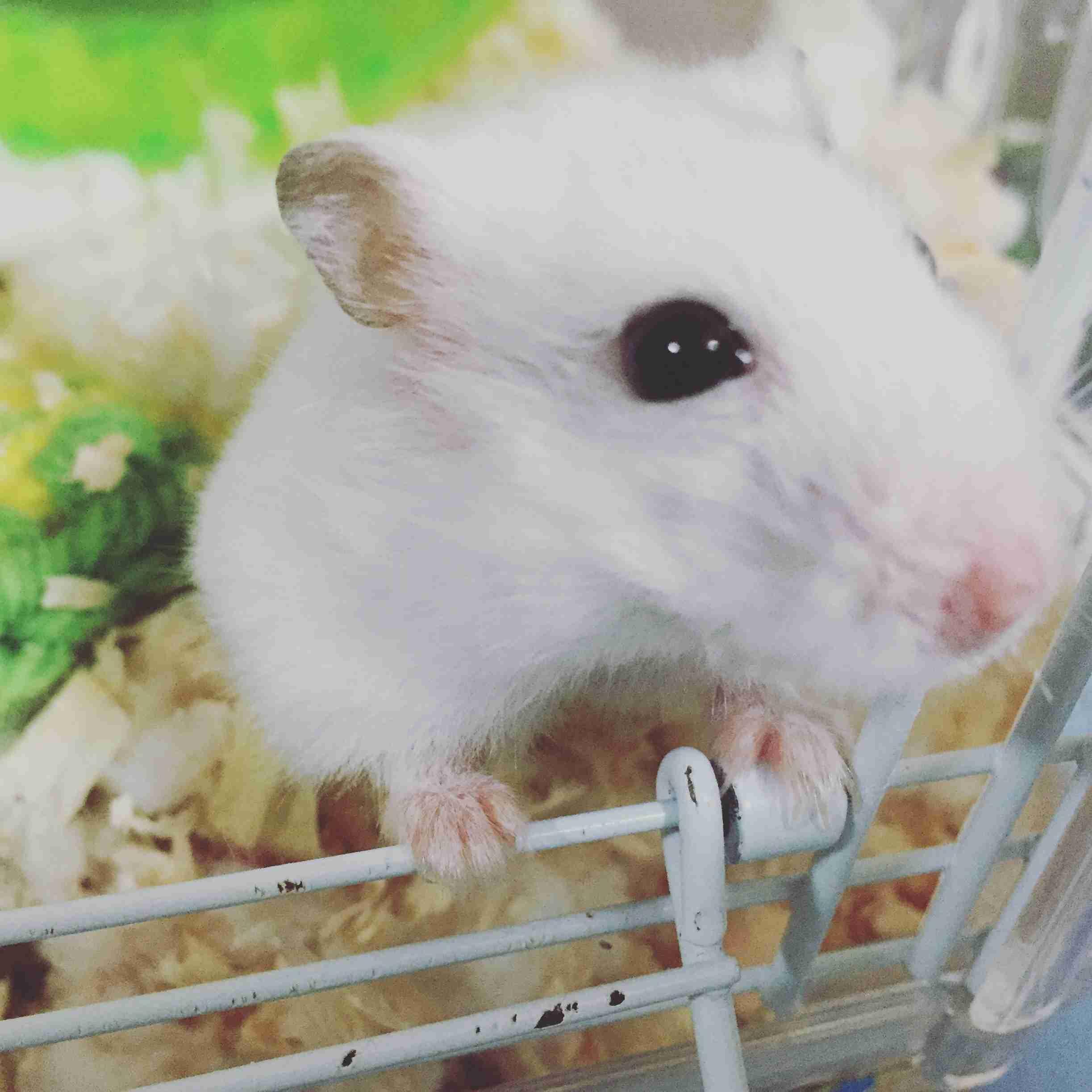 【画像】ハムスターが好き!