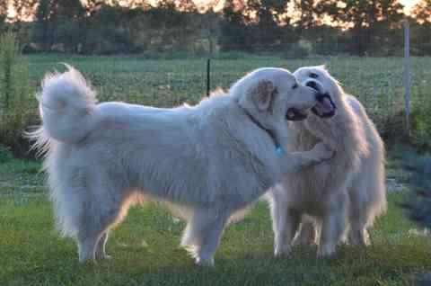 大型犬好きな人!