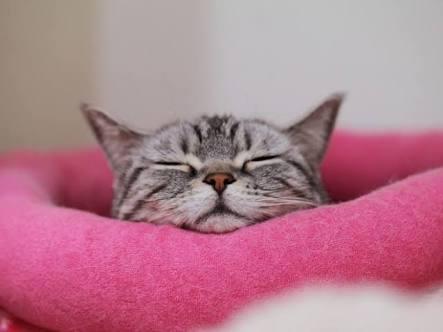 「お・や・す・み・な・さ・い」が揃ったら即、眠るトピ