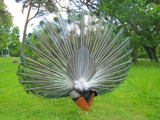 動物の後頭部の画像を貼るトピ