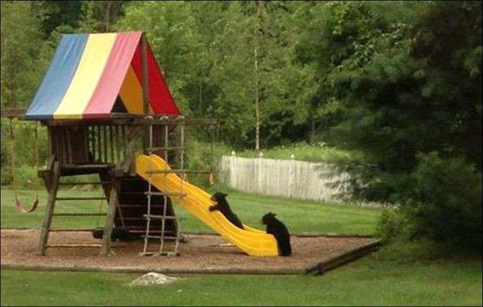 公園滑り台にクマ、小学4年の女児遭遇 滋賀
