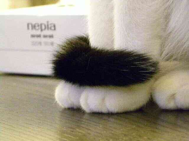 猫があざとい気がする。